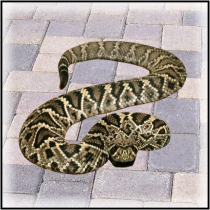 Animal Rangers, FL Snake Information - Florida Wildlife Control Services